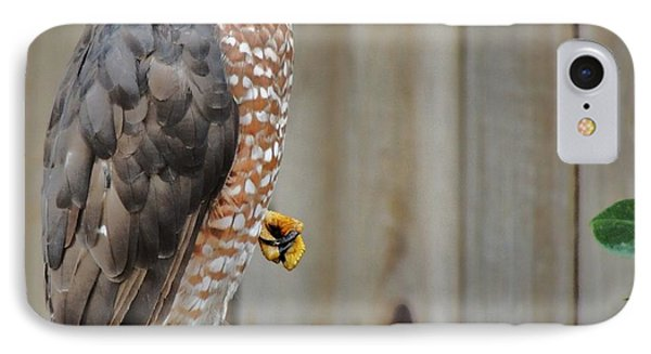 Coopers Hawk 4 IPhone Case