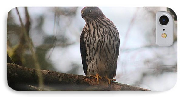 Cooper's  Hawk Dines Here Phone Case by Kym Backland