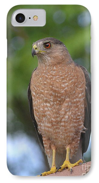 Cooper's Hawk I IPhone Case by Suzette Kallen