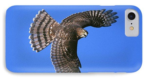 Coopers Hawk Phone Case by Jim Zipp
