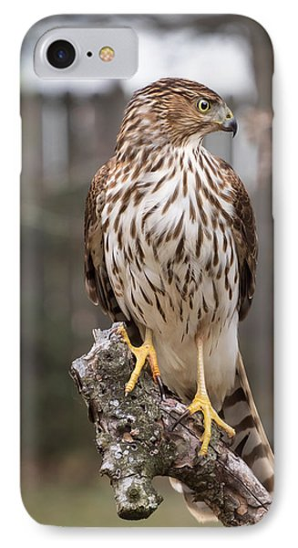 Cooper's Hawk IPhone Case