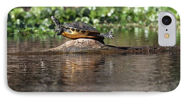 IPhone Case featuring the photograph Cooter On Alligator Log by Paul Rebmann