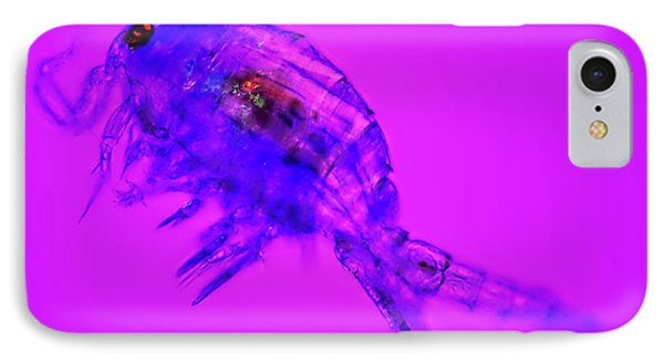 Copepod Crustacean IPhone Case by Frank Fox