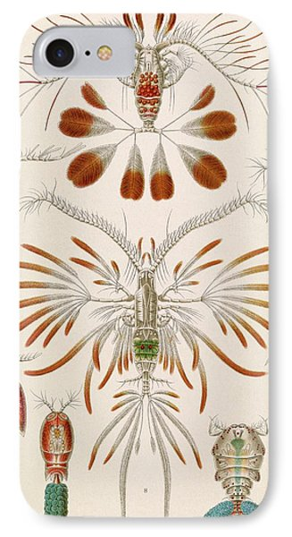 Copepod Crustaceans IPhone Case by Library Of Congress