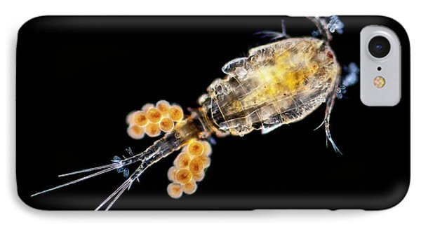 Copepode IPhone Case