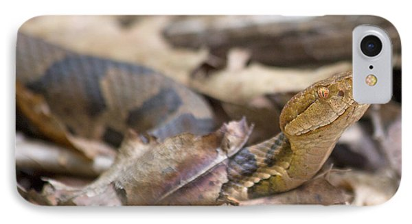 Copperhead In The Wild IPhone Case by Betsy Knapp