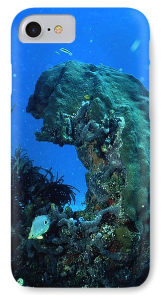 Coral In The Gulf Of Mexico Phone Case by Retro Images Archive