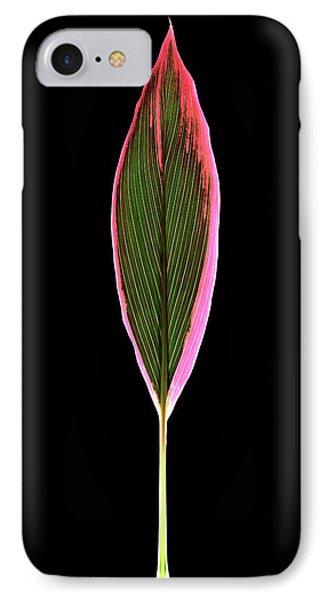 Cordyline Fruticosa Leaf IPhone Case by Gilles Mermet