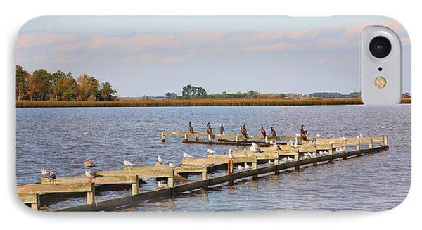 Cormorants And Seagulls On Old Dock Near Blackwater  National Wildlife Refuge Near Cambridge Md IPhone Case by William Kuta