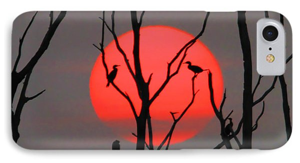 Cormorants At Sunrise IPhone Case by Roger Becker