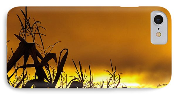 Corn At Sunset IPhone Case by Erick Schmidt