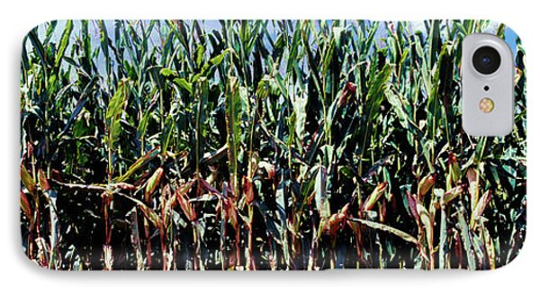Corn Crop In A Field, Amish Country IPhone Case by Panoramic Images