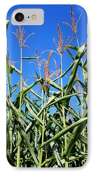 Corn Field Rural America Phone Case by Heather Allen