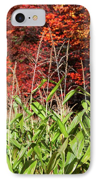 Corn Growing In A Field And Autumn IPhone Case by Jenna Szerlag