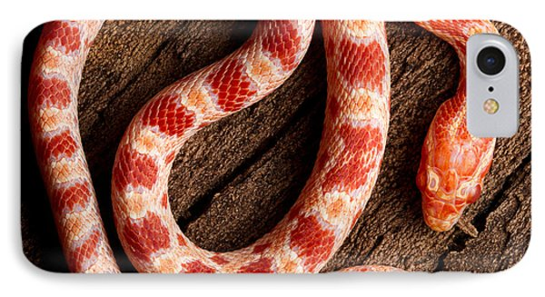 IPhone Case featuring the photograph Corn Snake P. Guttatus On Tree Bark by David Kenny