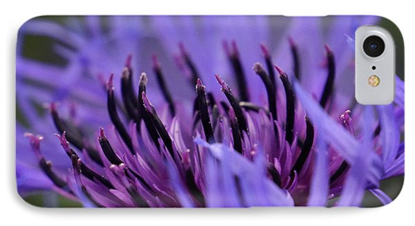 IPhone Case featuring the photograph Cornflower by Inge Riis McDonald