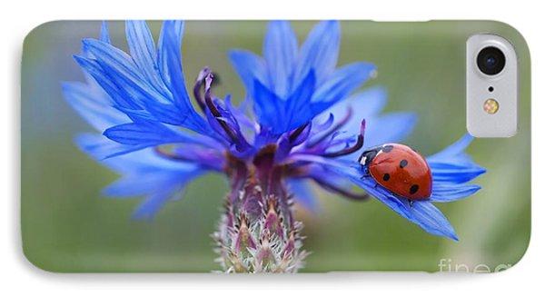 IPhone Case featuring the photograph Cornflower Ladybug Siebenpunkt Blue Red Flower by Paul Fearn