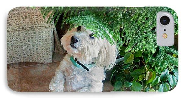 Coton De Tulear Dog Begging IPhone Case