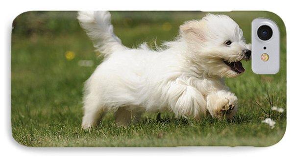 Coton De Tulear Dog IPhone Case by John Daniels