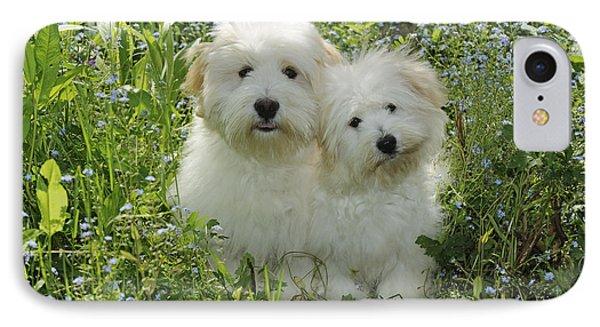 Coton De Tulear Dogs IPhone Case by John Daniels