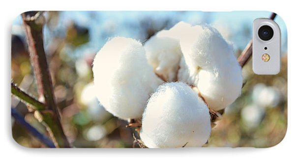Cotton Boll Iv IPhone Case by Debbie Portwood