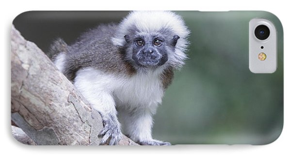 IPhone Case featuring the photograph Cotton Top Tamarin  by Shoal Hollingsworth