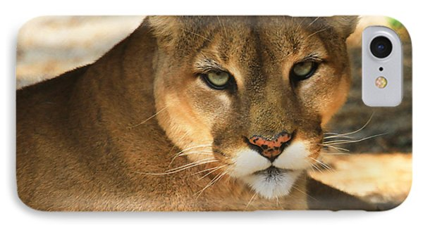 Cougar II IPhone Case by Roger Becker