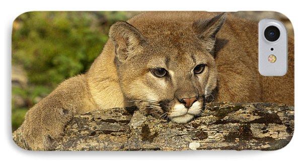 Cougar On Lichen Rock IPhone Case by Sandra Bronstein
