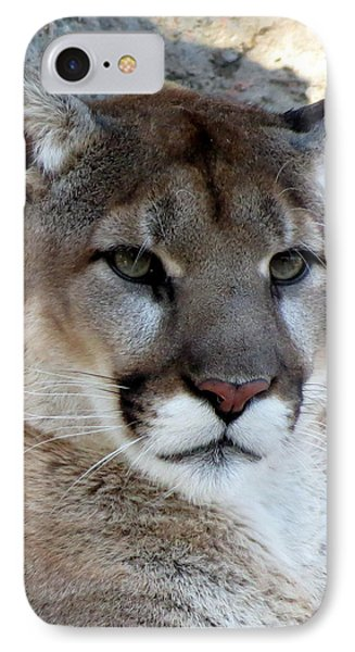 Cougar IPhone Case by Ramona Johnston