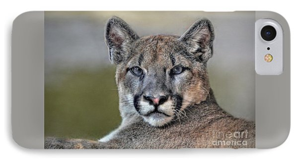 IPhone Case featuring the photograph Cougar  by Savannah Gibbs