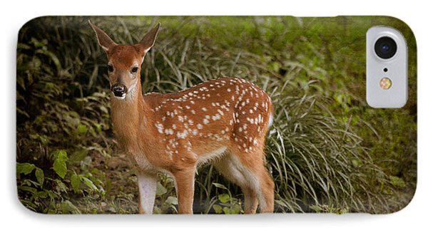 Could It Be Bambi IPhone Case by Linda Segerson