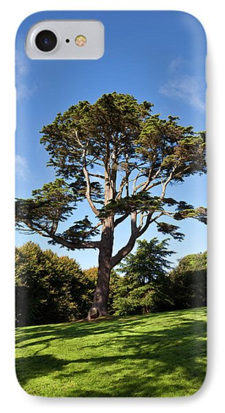 County Down Ireland Lebanon Cedar IPhone Case by Panoramic Images
