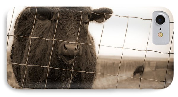 Cow At Fence In Sepia IPhone Case