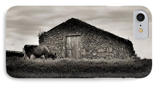 Cow Grazes At Rustic Barn  IPhone Case