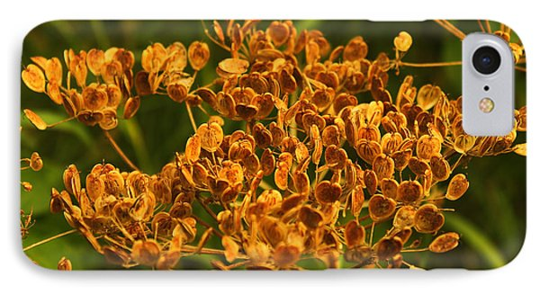 IPhone Case featuring the photograph Cow Parsnip Seeds by Sandra Foster