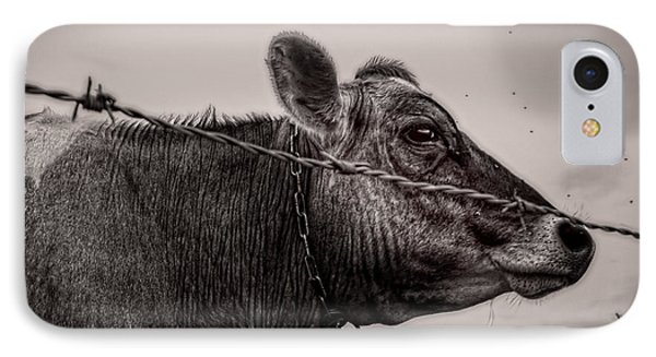 Cow With Flies IPhone Case