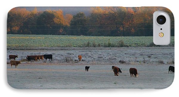 Cows At Sunrise IPhone Case by Dan Sproul
