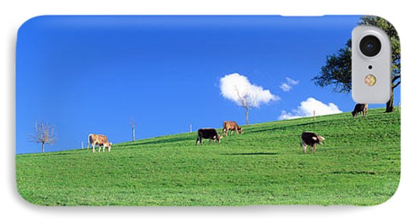 Cows, Canton Zug, Switzerland IPhone Case by Panoramic Images