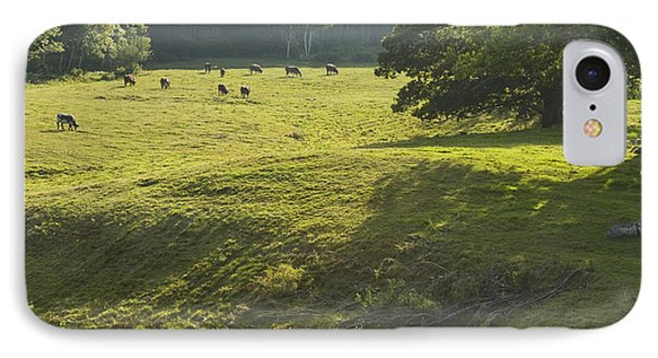 Cows Grazing On Grass In Rockport  Maine IPhone Case by Keith Webber Jr