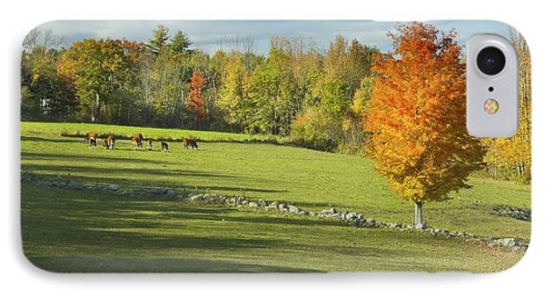 Cows Grazing On Maine Farm Field In Fall  IPhone Case by Keith Webber Jr