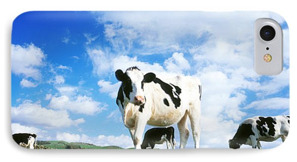 Cows In Field, Lake District, England IPhone Case