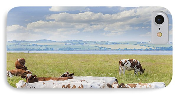 Cows In Pasture IPhone Case by Elena Elisseeva