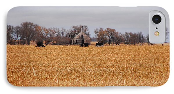 Cows In The Corn IPhone Case by Mary Carol Story