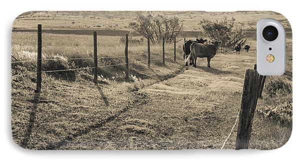 Cows In The Lane IPhone Case by Dawn Romine