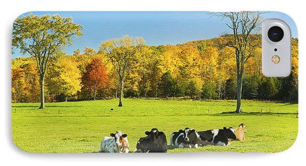 Cows Resting On Grass In Farm Field Autumn Maine Photograph IPhone Case by Keith Webber Jr