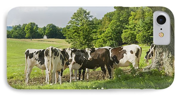 Cows Under Tree In Farm Field Summer Maine Photograph