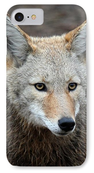 Coyote IPhone Case by Athena Mckinzie