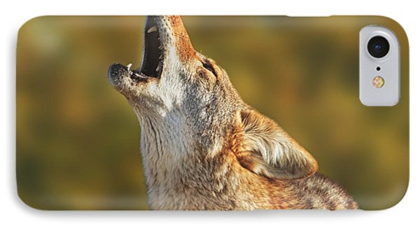 Coyote  IPhone Case by Brian Cross