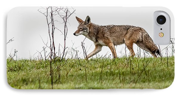 Coyote IPhone Case by Brian Williamson