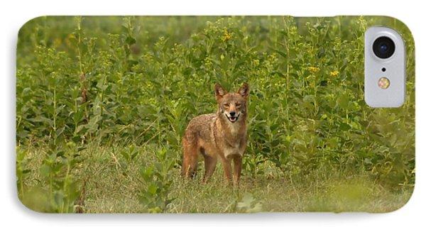 Coyote Happy IPhone Case